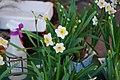 Daffodils (2).jpg