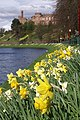 Daffodils and Inverness Castle - geograph.org.uk - 1247069.jpg