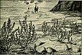 Das Leben der Pflanze (1906) (20216918844).jpg