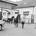 De paarden voor de koninklijke calèche in Willemstad, Bestanddeelnr 252-2742.jpg
