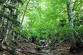 Dentro del bosque.jpg