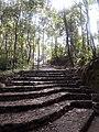 Dhulikhel forest.jpg