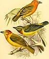 Die Vögel Afrikas (1900) (20326842214).jpg