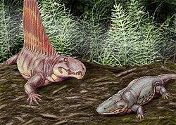 Dimetrodon et Eryops.