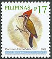 Dinopium javanense 2009 stamp of the Philippines.jpg