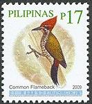 Dinopium javanense 2009 stamp of the Philippines.jpg