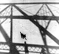 Dog Crossing Olentangy River (3317558548).jpg