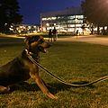 Dog at SFSU.JPG