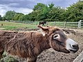 Donkey in Bromley.jpg