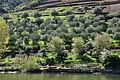 Douro River DSC 0467 (16868785868).jpg