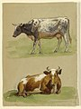 Drawing, Cattle, a Cow Walking and a Cow Crouching, 1875–80 (CH 18369139).jpg
