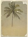 Drawing, Trunk and top of a palm tree, 1865 (CH 18201309).jpg