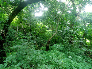 Eastern Highlands moist deciduous forests - Dry Evergreen Forests during Monsoon along the Eastern Ghats at Visakhapatnam