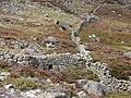 Dry stone walls - geograph.org.uk - 243320.jpg