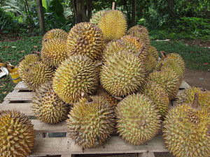 Durian - Image: Durian