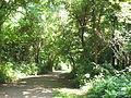 Dyke Marsh path.jpg