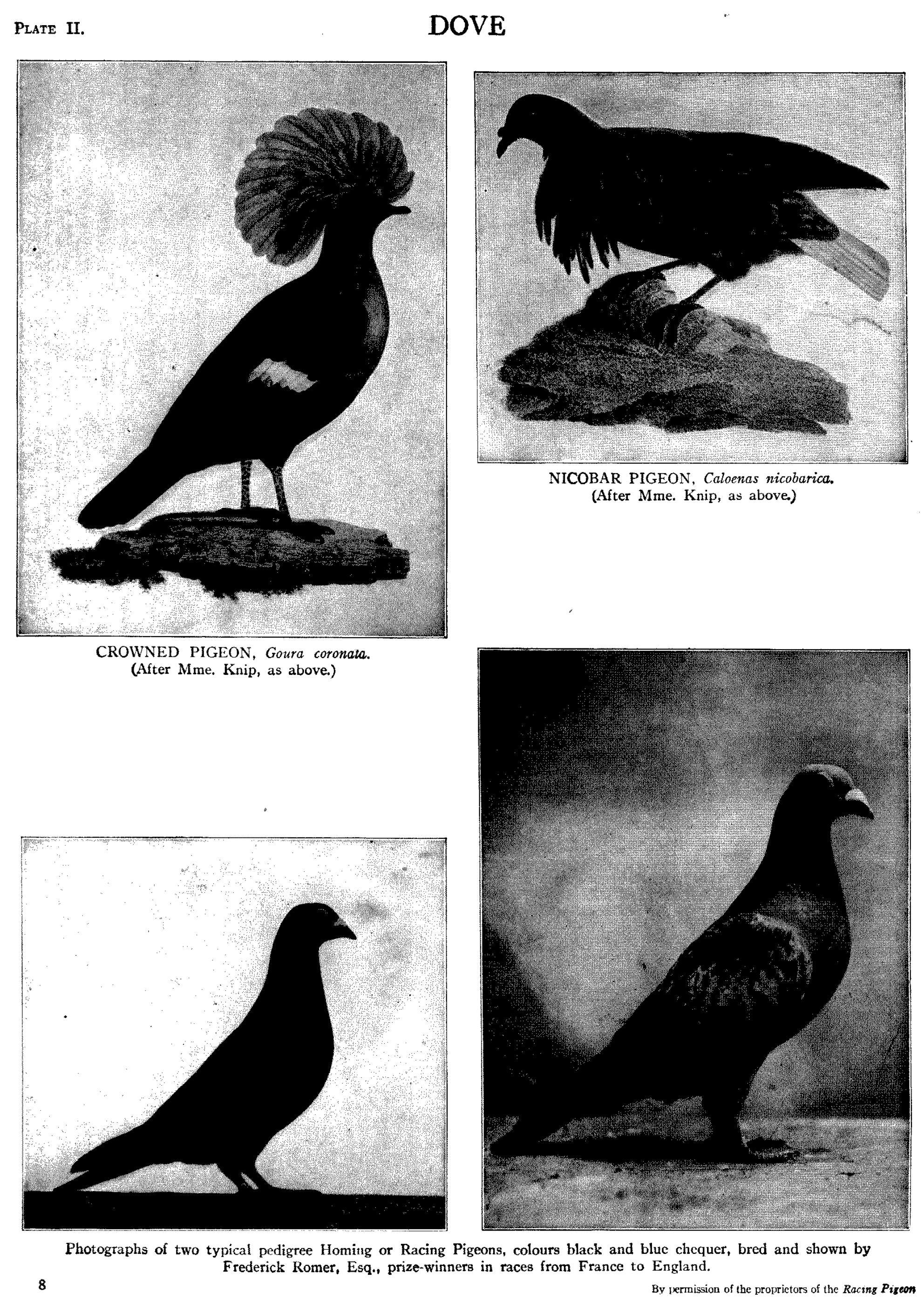 Page:EB1911 - Volume 08 djvu/473 - Wikisource, the free