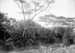 ETH-BIB-Bachvegetation am Makungu-River-Kilimanjaroflug 1929-30-LBS MH02-07-0456.tif
