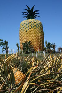 Eastern Cape-Big Pineapple-001.jpg