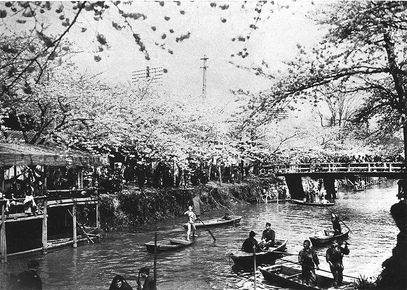 File:Edogawa-cherryblossoms-fullbloom.jpg