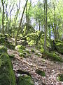 Eichelberg Granitklippe 712.JPG
