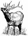 Elk rutting.jpg
