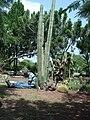 En los Jardines del Santuario de Schoenstatt - panoramio.jpg