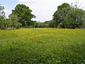 Enclosed field next to Penn Common, New Forest - geograph.org.uk - 441175.jpg
