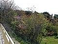 Entre Montpellier et Boirargues (2396798051).jpg