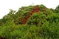 Erramatti Dibbalu (Red Sand Hills) in Visakhapatnam 04.jpg