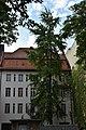Fächerblattbaum in Berlin.jpg