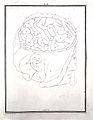 F. Vicq d'Azyr, Traite d'anatomie et de physiologie Wellcome L0022081.jpg