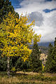 Fall Colors at Rocky Mountain National Park, Colorado.jpg