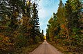 Fall Colors in the Superior National Forest - Meander Lake Dirt Road, Minnesota in Autumn (30611598638).jpg