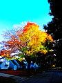 Fall Foliage in Madison - panoramio (2).jpg