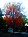 Fall Foliage in Madison - panoramio (4).jpg
