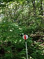 Ferns on the path - panoramio.jpg