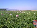Fields in Krusha e Madhe (Fushat e Krushes se Madhe).jpg