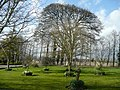 Fine trees - geograph.org.uk - 742688.jpg