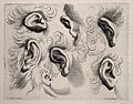 Five ears surrounded by hair. Engraving after C. Le Brun. Wellcome V0009411.jpg
