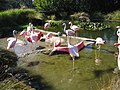 Flamingos at the San Francisco Zoo - panoramio.jpg