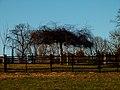 Flat Tree - panoramio.jpg
