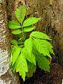 Flickr - archer10 (Dennis) - Belize-0886.jpg