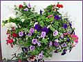 Flickr - ronsaunders47 - Bloomin' heck 1.jpg