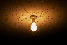 pollution lumineuse wikimedia commons