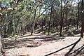 Flinders Ranges SA 5434, Australia - panoramio (5).jpg