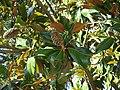 Flora (27405780933).jpg