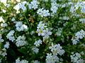 Flower-center133840.jpg