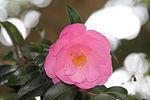 Flower 9531 (9501476448).jpg