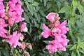 Flower 9533 (9501475960) (4).jpg